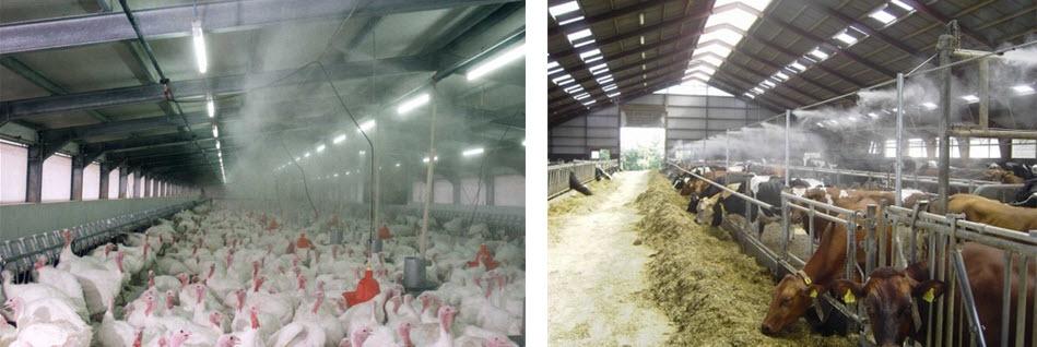 Охлаждение туманом в животноводстве